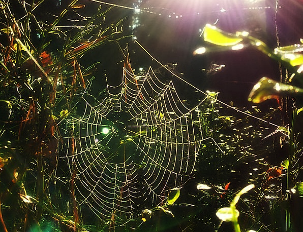 Spider Web Landscapes Woodland Nature Nature Count