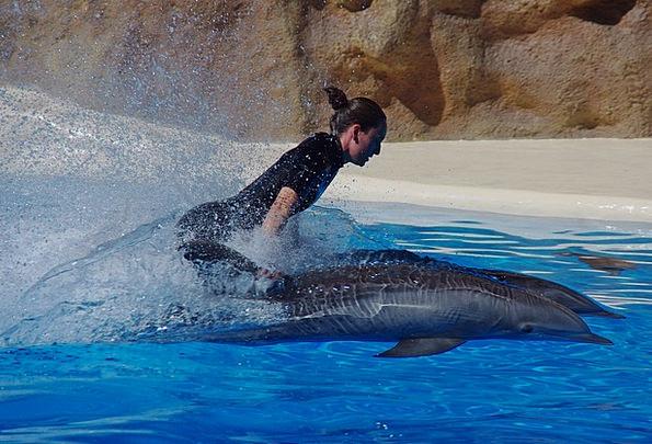 Dolphin Fashion Beauty Water Aquatic Marine Mammal