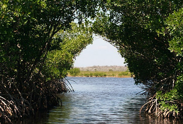Everglades Swamps Bogs Mangroves