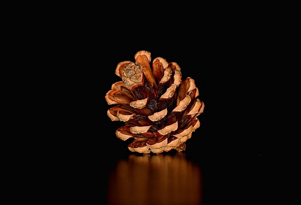 Pine Cone Blow Seeds Kernels Tap Pine Cones
