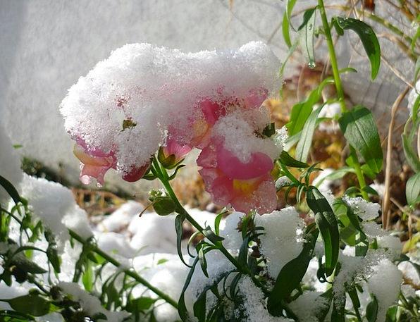 Snow Snowflake Landscapes Season Nature Flower Flo