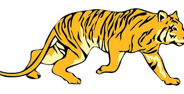 Tiger Strips Animal Physical Stripes Wildlife Tail