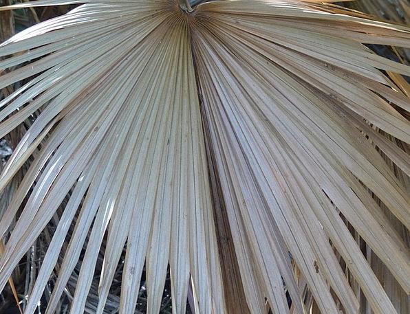 Palm Leaf Leaf Greenery Lush Luxurious Foliage Ste