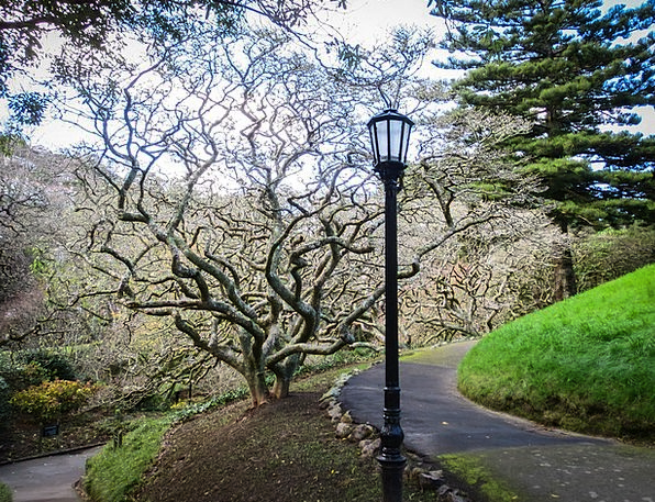 Park Common Plot Lantern Lamp Garden Tree Sapling