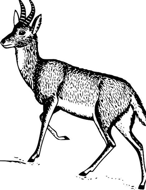 Deer Class Male Masculine Species Habitat Animal P