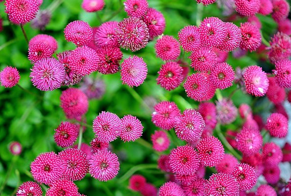 Floral Flowery Florae Natural Usual Plants Herb Bl