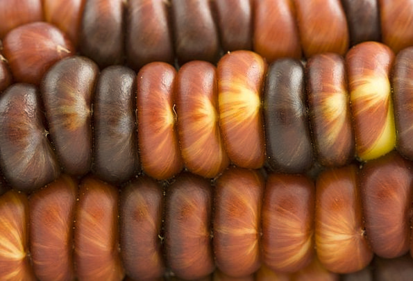 Indian Goo Macro Instruction Corn Close Near Detai