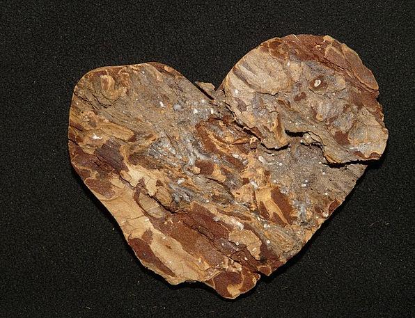 Bark Bay Sapling Heart Emotion Tree Love Darling E