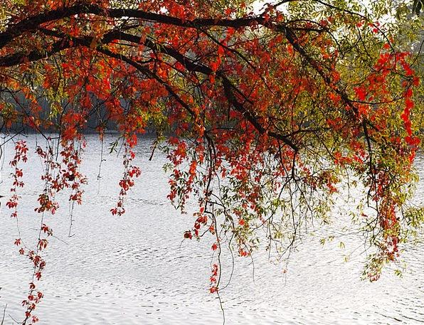 Leaves Greeneries Bloodshot Colorful Interesting R