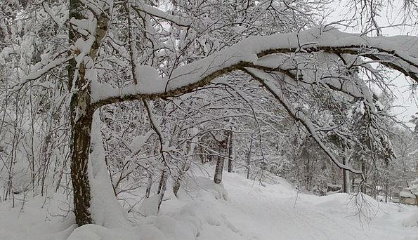 Stockholm Season Snow Snowflake Winter Winter Drea