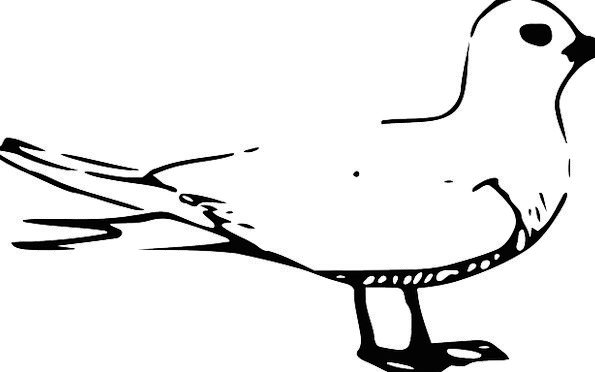 Bird Fowl Seagull Gull Water Aquatic Webbed Feet F
