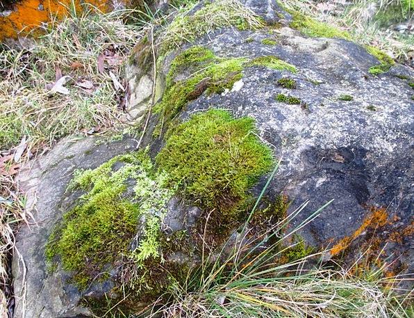 Rock Pillar Grasses Lawns Moss Romanshorn Fouling