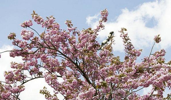 Spring Coil Landscapes Nature Birth Natal Blossom