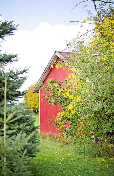 Barn Outbuilding Bloodshot Wood Timber Red Red Bar