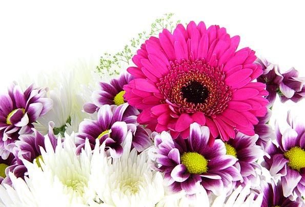 Beautiful Lovely Loveliness Bloom Beauty Flower Bl