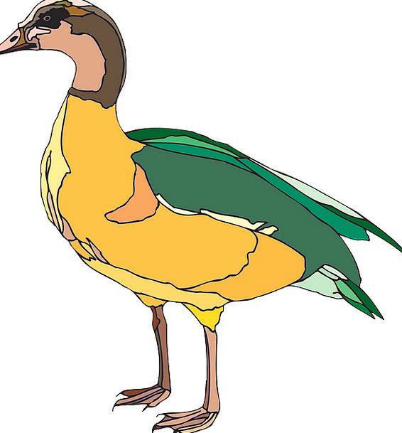 Duck Stoop Fowl Bird Duckling Nature Countryside D