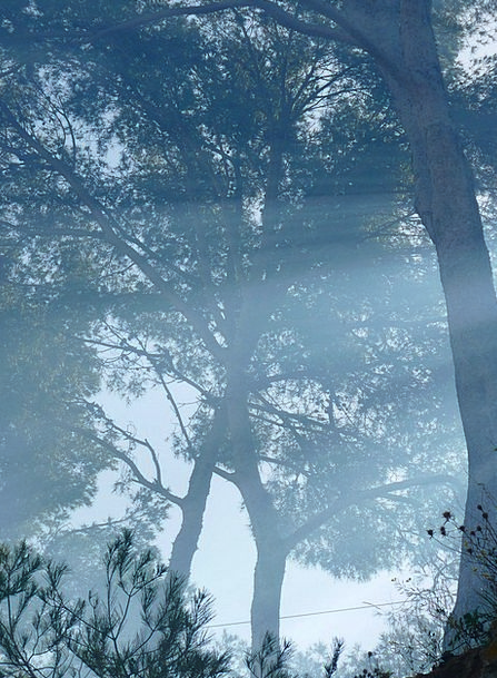 Tree Sapling Mist Smoke Burn Fog Mood Disposition