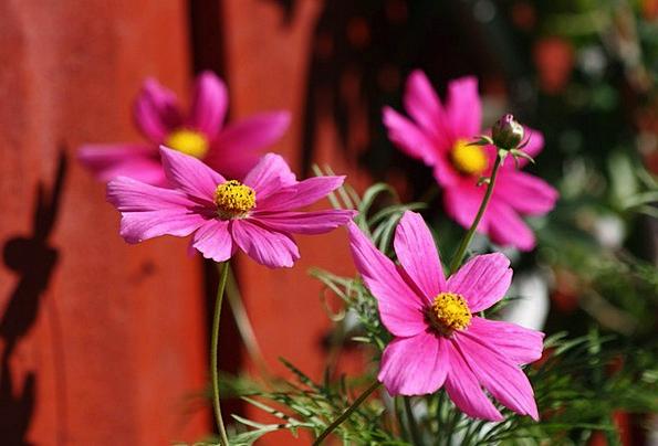 Flower Floret Landscapes Flushed Nature Flora Vege