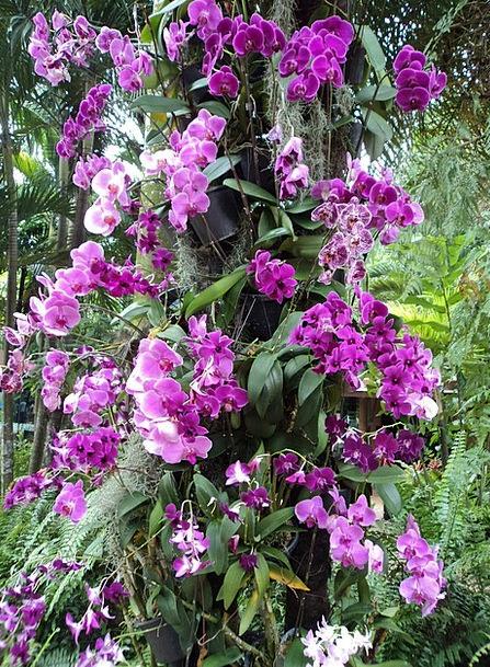 Orchids Mauve Flower Floret Violet Plants Florae L