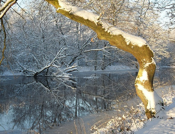 Winter Season Landscapes Lovely Nature Snow Snowfl