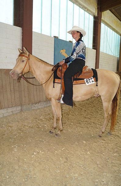 Horse Mount Fashion Beauty Cowboy Unreliable Dun W