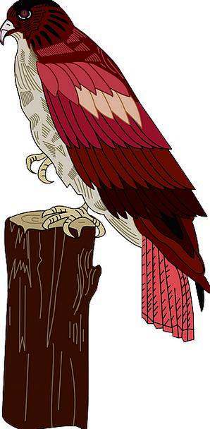 Red Bloodshot Fowl Wings Annexes Bird Hawk Warmong
