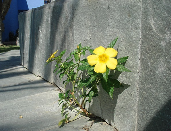 Wall Flower Landscapes Curb Nature Plant Vegetable