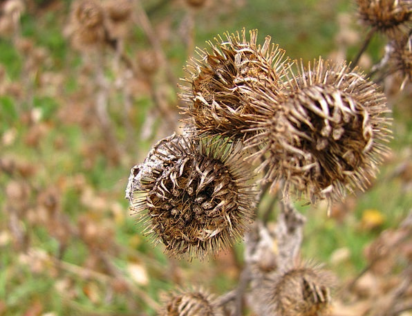 Thistle Landscapes Thirsty Nature Nature Countrysi