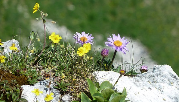 Flowers Plants Landscapes Coil Nature Mountain Flo