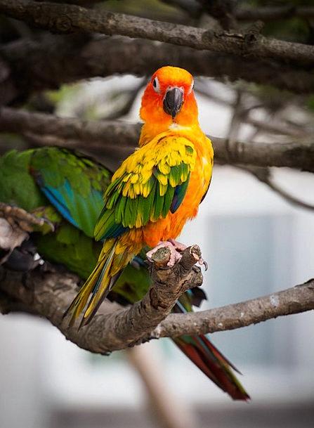 Parrot Imitator Natures Greenness Inexperience Bir