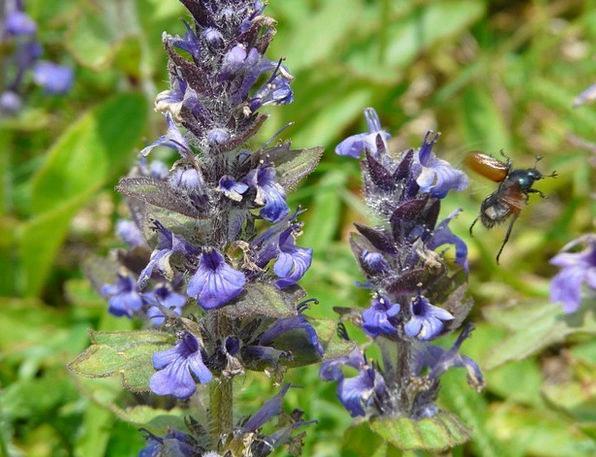 Wild Sage Landscapes Floret Nature Spring Coil Flo