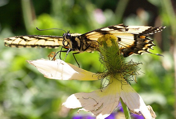 Butterfly Nature Countryside Insect Fragile Spring