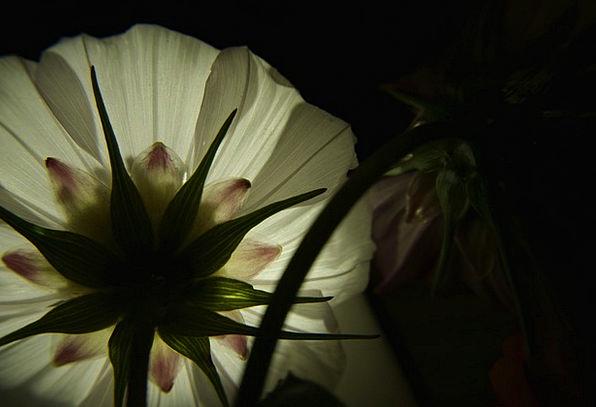 Flower Floret Snowy Light Bright White Petal Contr