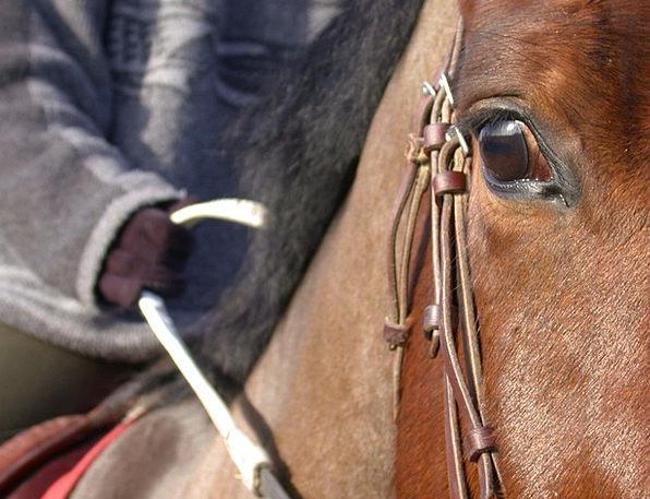 Horse Mount Shut Eye Judgment Close Up Bai Color H
