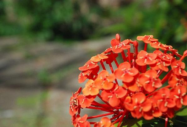Flowers Plants Landscapes Floret Nature Wild Flowe