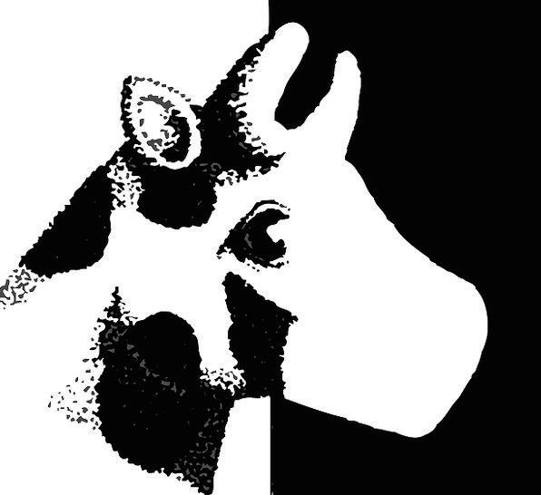 Cow Intimidate Skull Style Chic Head Animal Physic