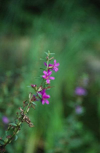 Wild Flowers Landscapes Plants Nature River Stream