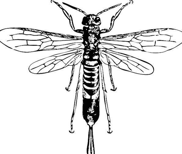 Wasp Siren Insect Bug Horn Sting Bite Proboscis St