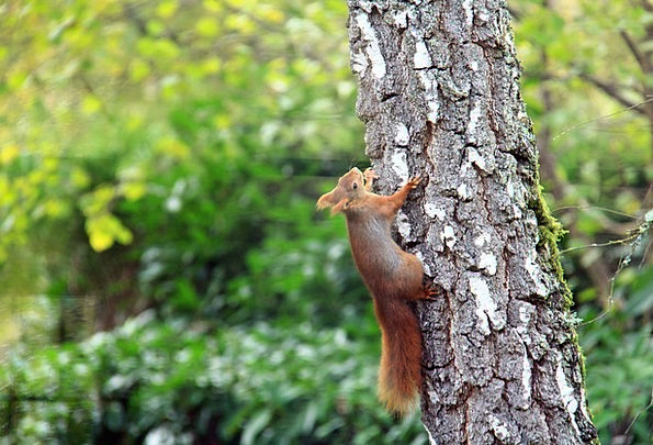 Squirrel Collector Physical Nature Countryside Ani