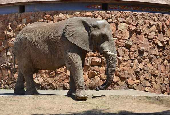 Elephant Monster Physical Big Large Animal Zoo Men