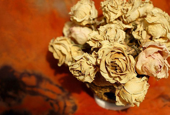 Flowers Plants Dehydrated Bouquet Bunch Dried Rust