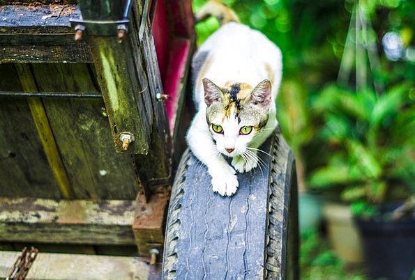 Cat Catlike Sneaking Niggling Feline Kitty Hunting