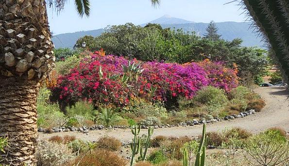 Spain Teide Tenerife Flowers Plants Canary Islands