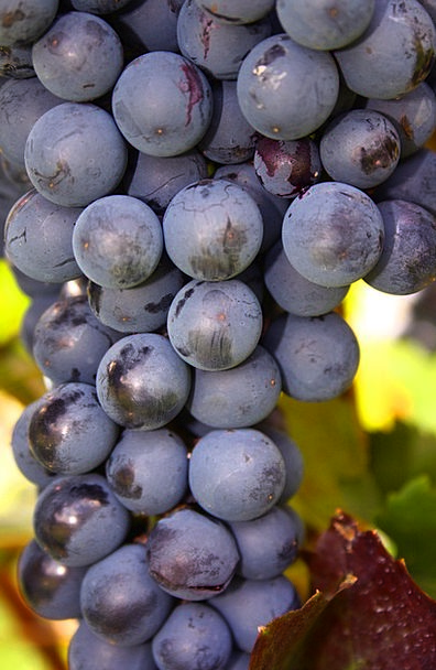 Grapes Drink Group Food Fruit Ovary Bunch Natural