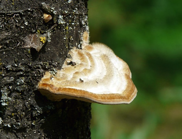 Tinder Kindling Landscapes Burgeon Nature Tree Sap