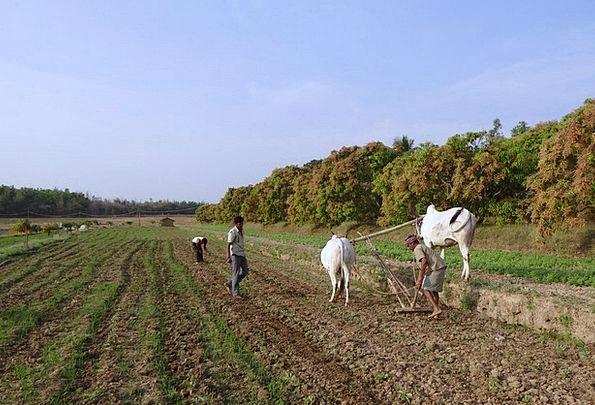 Ox-Plough Farmer Agriculturalist Ox Plough Plow Ti