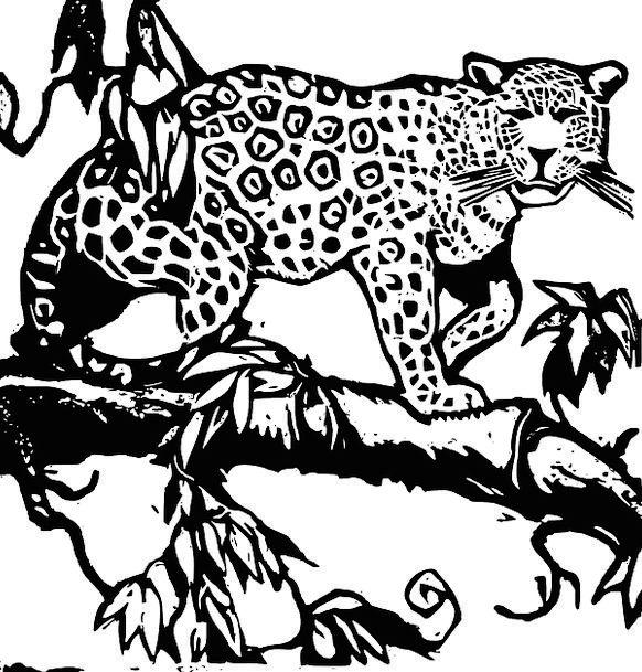 Jaguar Spotted Cat Big Cat Leopard Feline Wild Cat