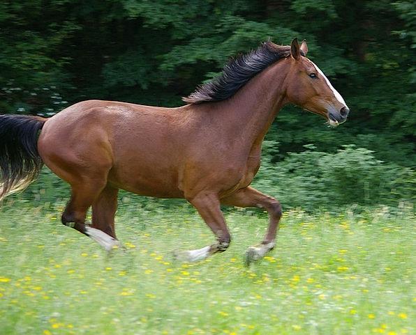 Horse Mount Dash Animal Physical Gallop Three Cloc