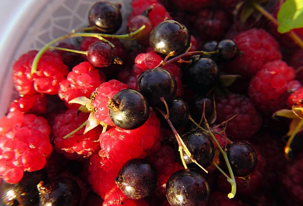 Fruits Of The Forest Black Currants Fruit Plate Be