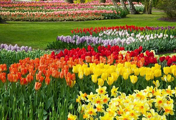 Beautiful Lovely Floret Bed Divan Flower Green Blo